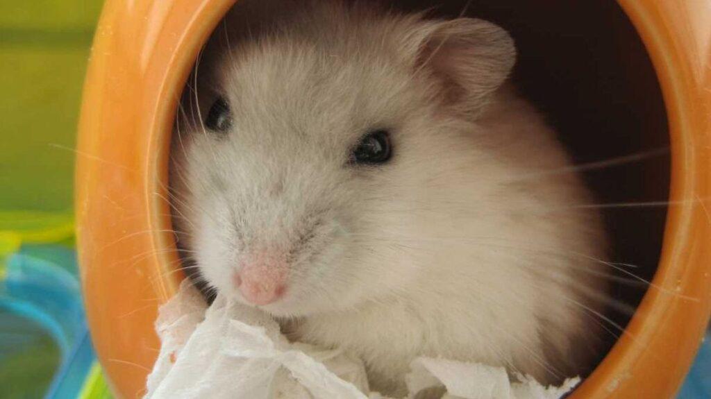 Los 10 mejores juguetes para hamsters